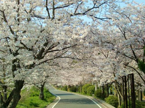 北九州・中間・直方・飯塚エリアの花見スポット、桜の名所まとめ