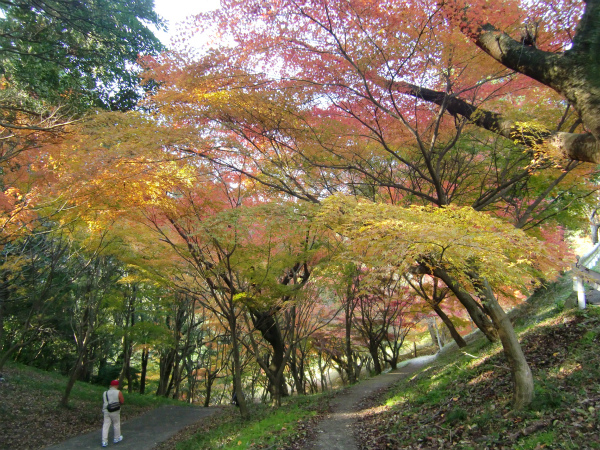 福岡市の有名神社・初詣スポット7つを徒歩で巡ってきた