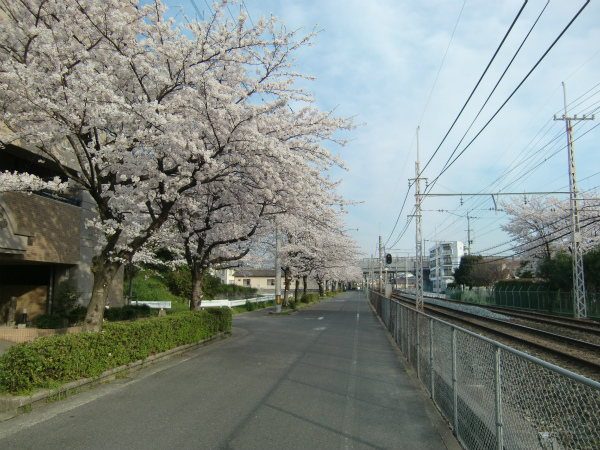 [Я]西鉄天神大牟田線の端から端までウォークその1:天神→二日市