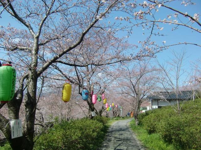 3月末の飯塚は春の陽気で桜の開花が加速していた【ウォーキング天道編】