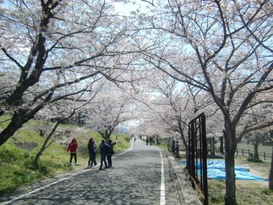 桜は今週がピーク!遠賀地区の花見スポット・垣生公園に行ってきた