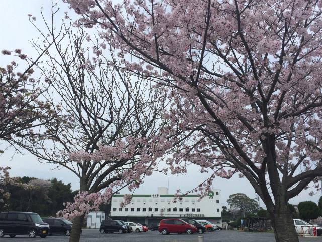 もち吉本社工場