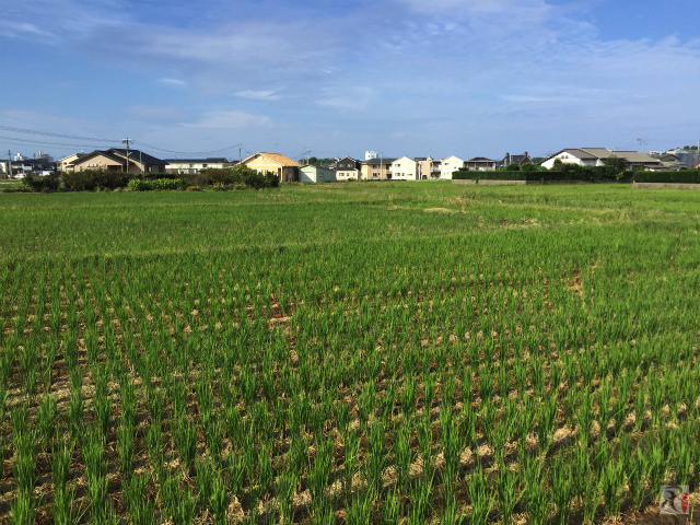 福津市の田園風景