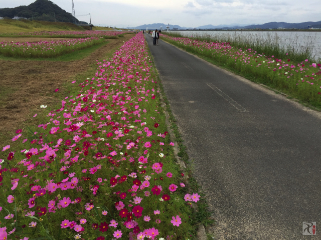 遠賀川河川敷の遊歩道