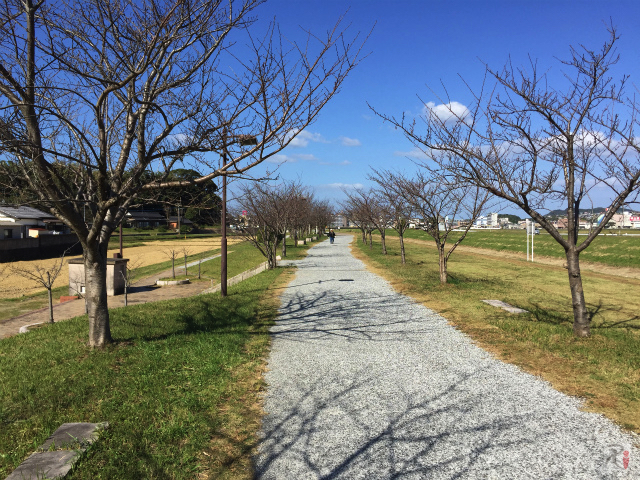 釣川遊歩道の桜並木