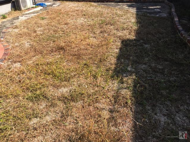 雑草を刈った後の庭