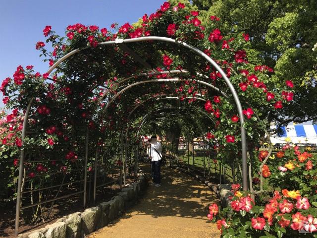 駕与丁公園バラ祭り