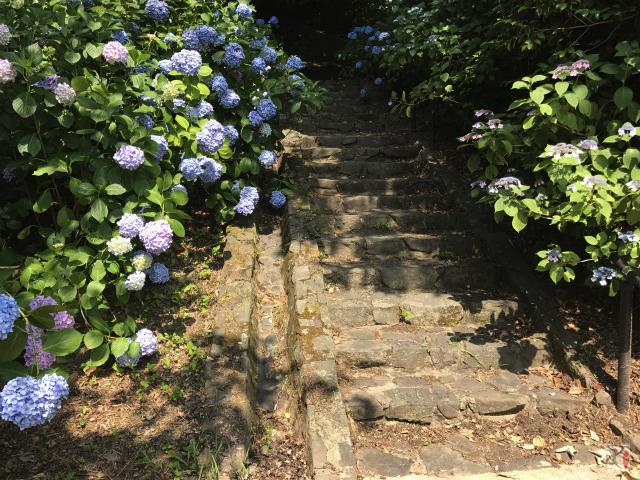 あじさいの遊歩道階段