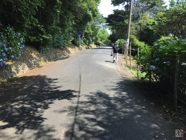 高塔山の道路